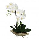 Phalaenopsis in Schale, 2 Zweige, L40cm, weiß